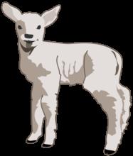 Lamb - poem